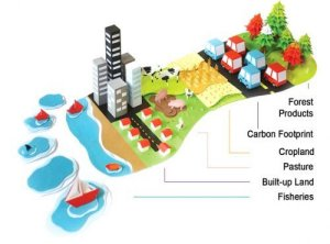 Infographic showing the causes of humanity's global ecological footprint