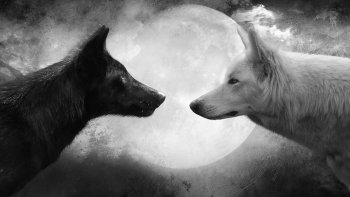 Two wolves facing each other with a moon in the background
